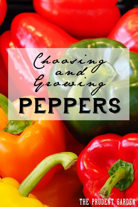 Choosing And Growing Peppers