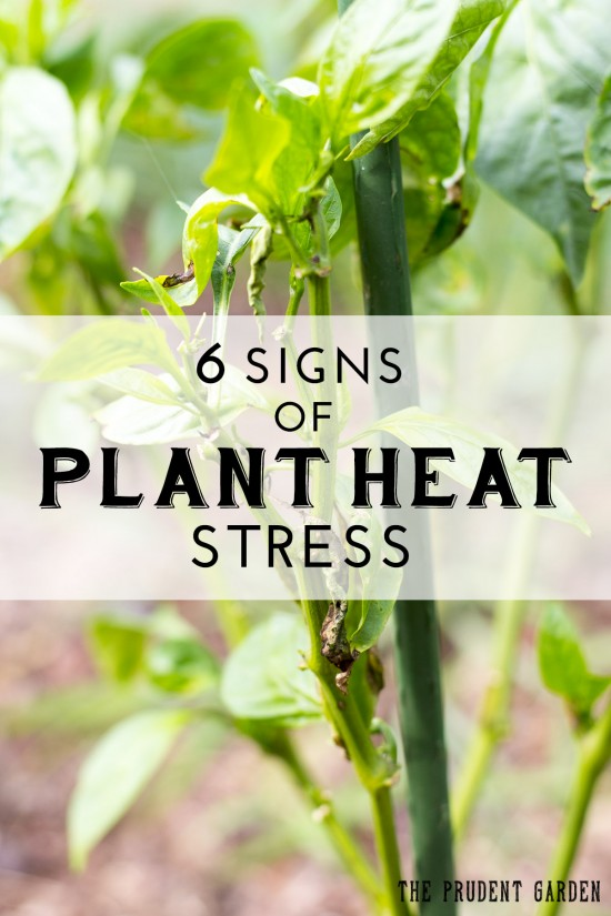 6 Signs of Plant Heat Stress