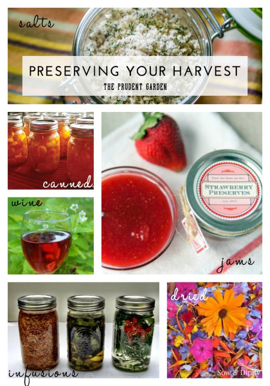 Preserving Your Harvest |Recipes, Tips and Ideas