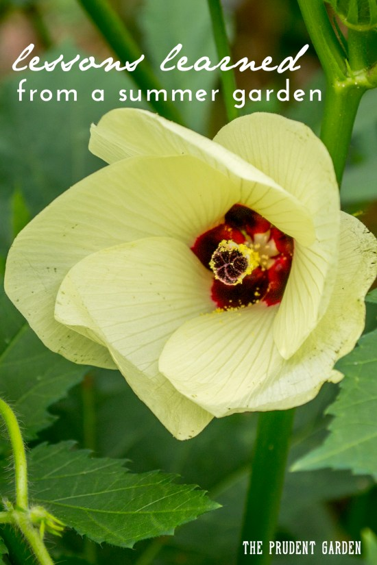 Every season I discover how much I still don't know about gardening. Here are some of the lessons I learned in the garden this summer.