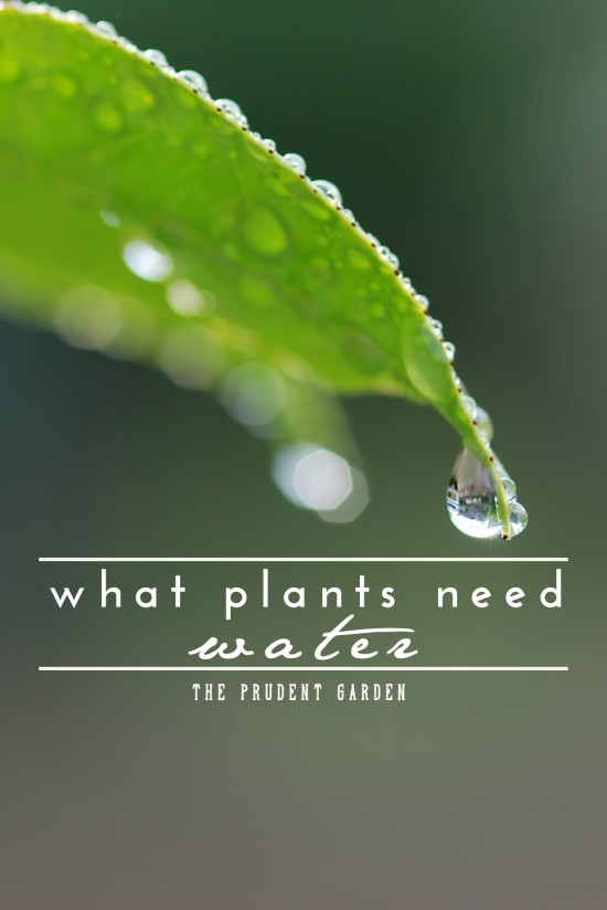 It's no secret that water is a necessity for a healthy landscape. Even desert plants need water occasionally. The questions are, how much and how often.