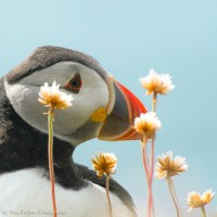 New month, new week, new hope, new Puffin!