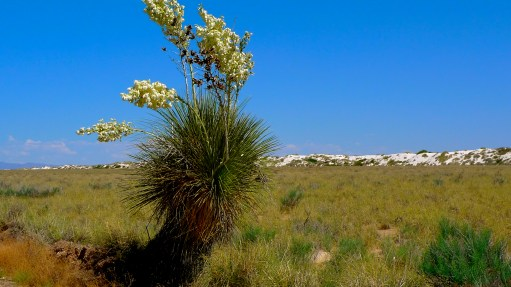 The dessert beauty of New Mexico