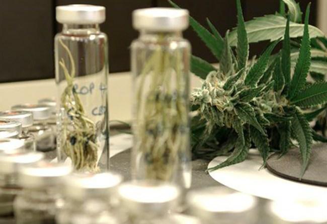 Participantswantedforworld-firststudyintocannabisrelapse2650x450