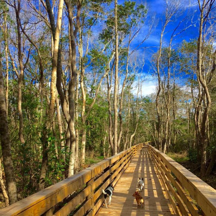 A newly completed section of the Southwest Greenway was opened late last year.