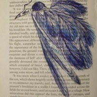She Comes Cloaked in Blue Feathers