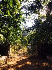 The protected forests of the Rajaji National Park slowly creeps in...