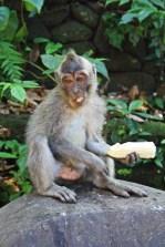 Monkeyside