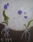 Orchids (adder-mouthed) - SYVarnam
