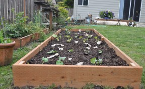 Large Raised Bed