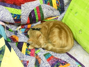 Cute kitten asleep on colorful quilt