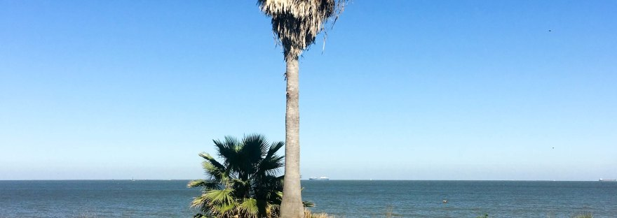 Two palm trees at waters edge of Galveston Bay in Bacliff TX on a warm sunny February day