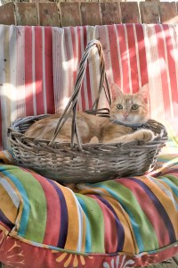 cute kitten in a basket on outdoor furniture