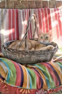 cute kitten in a basket on outdoor furniture