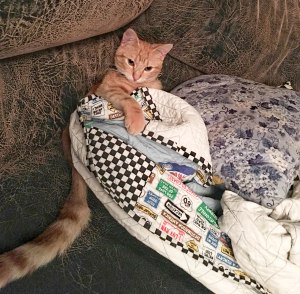 Cute kitten covered up with a quilt