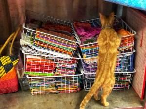orange cat looking at fabric