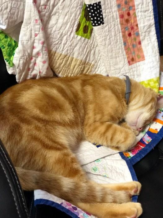 orange cat asleep on a quilt in The Quilt Rambler Studio