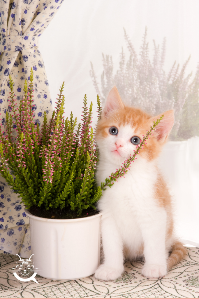 how to keep cats out of plants