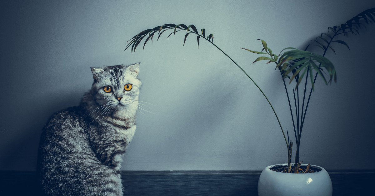 How To Keep Cats Out Of Plants [7 Simple But Effective Ways]