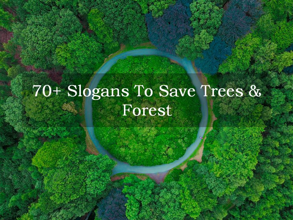 People also make money by clearing the forests and selling the lumber and wood to be. 70 Slogans To Save Trees Forest