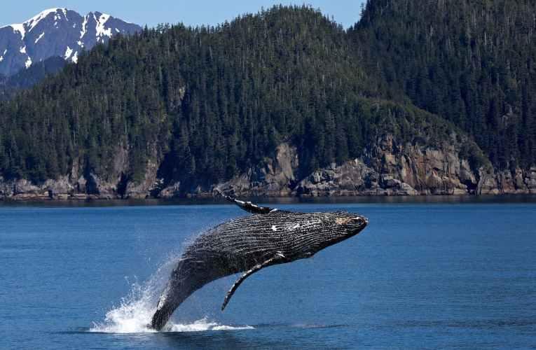 الحوت يلعب الغميضة