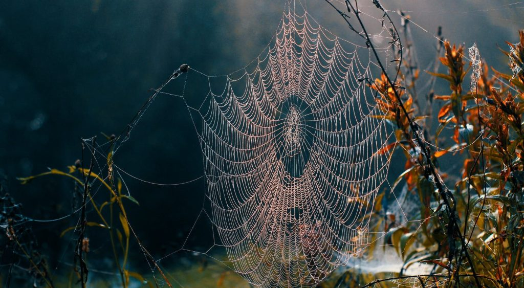spider web on dry plant in nature