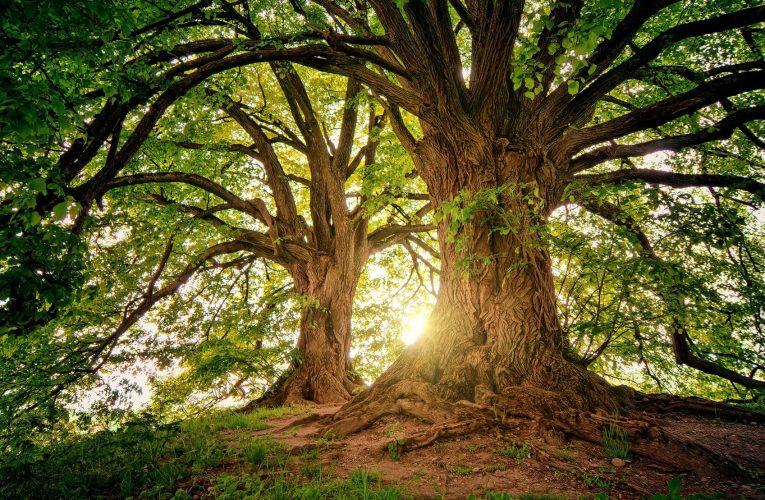 من الشجر الأخضر نارا