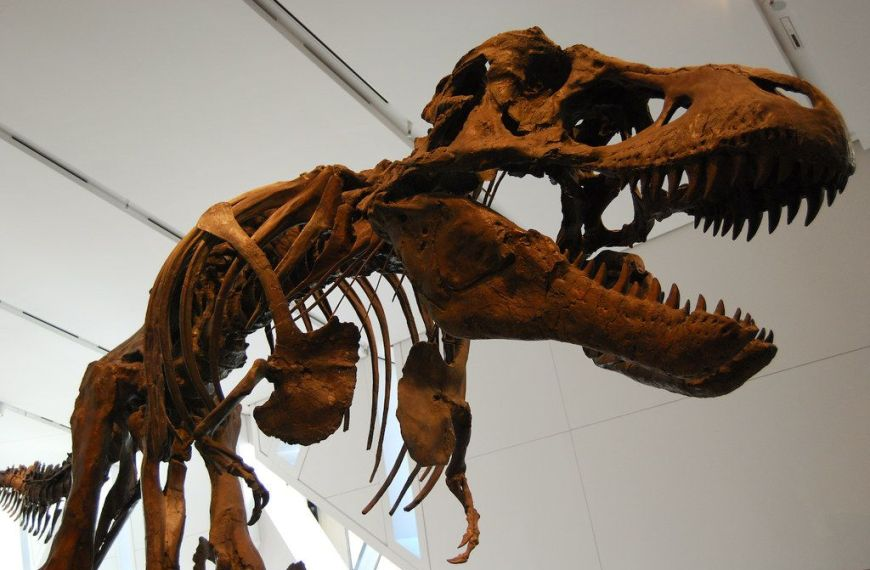 Can Dinosaurs Come Back?