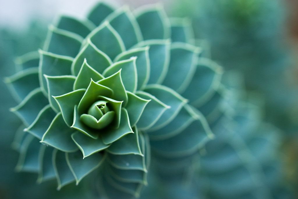 Read more about the article Fibonacci: The Numbers of Nature