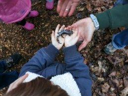 Marbled Salamander.