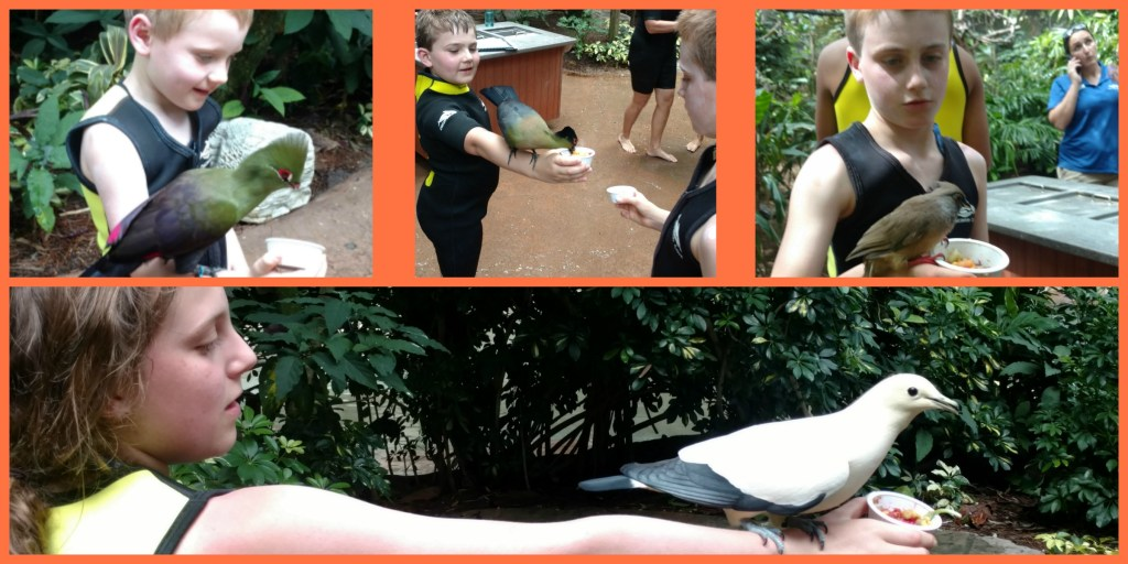 tRR Aviary collage with kids