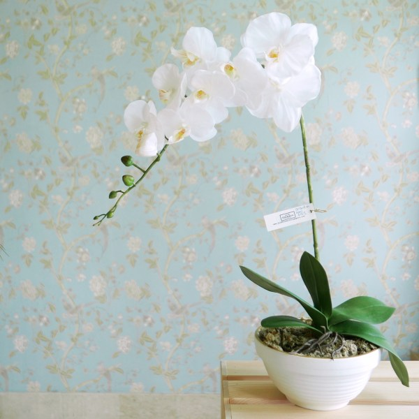 White phalaenopsis orchid in Seraph Bowl