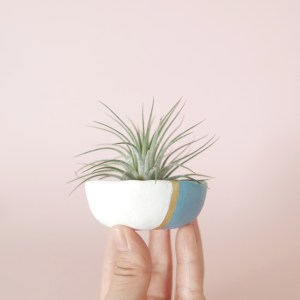 Air Plant in pinch pot