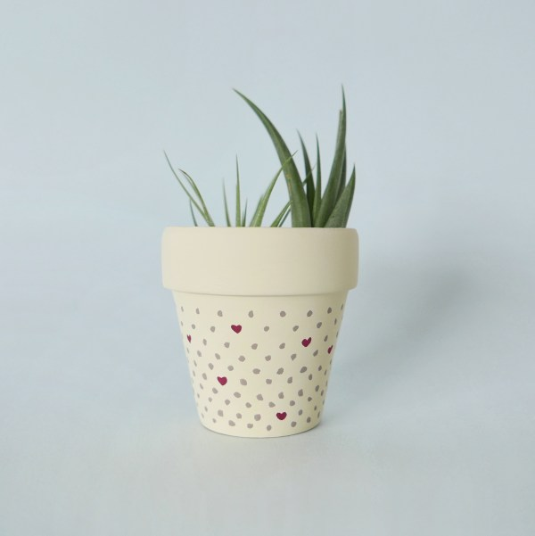 Dots about you (cream) pot with air plant
