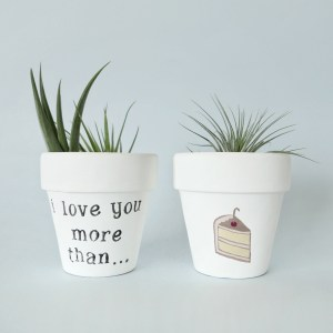 I love you more than cake pots with air plants