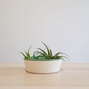 Zen (soft green) with air plants