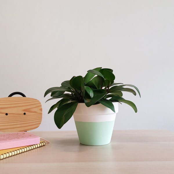 Minty Fresh Plant Pot by The Rain in Spain (pictured with peperomia plant)