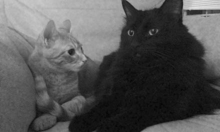 Cats make the purr-fect partners