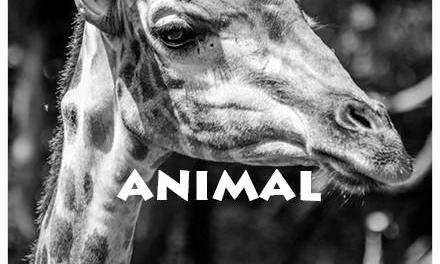 Our obsession with animals on the internet