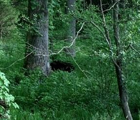 060-Black Bear