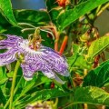 passion-flower-finding your passion excercise, therapists network