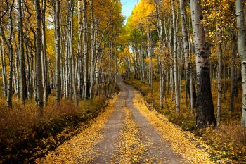 Back Road through Aspen Grove. Signifies private therapy intensive for lesbians or private relationship retreat for lesbians in New England.
