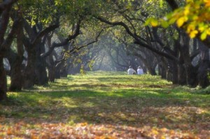 Autumn shady tree path | Trauma Recovery Counseling Services | Jennifer Levin | Therapy Heals | Pasadena, CA 91106