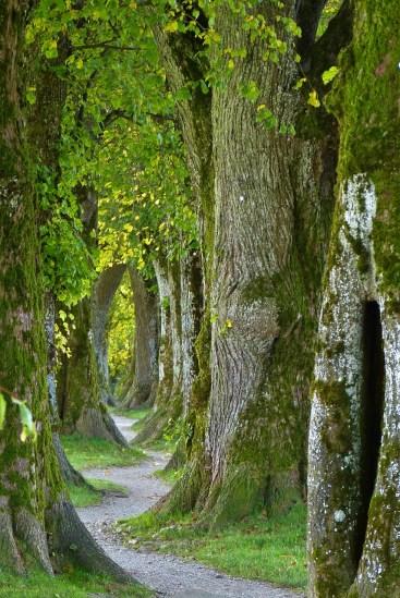 trees-many