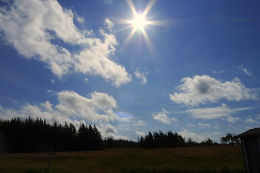 Cape Breton, Judique, Old Farm, Old Farmhouse, Meadow, Sunflare