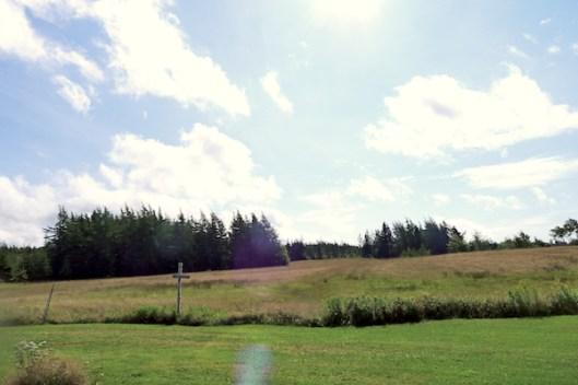 Cape Breton, Judique, Old Farm, Old Farmhouse, Meadow, Sunflare