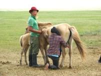 Mongolian herders, 2011