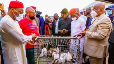 Photo of Imo: Governor Hope Uzodimma commences 'rabbit empowerment'