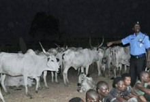 Photo of Gunmen kill livestock guard in Benue