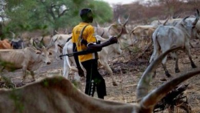 Photo of Fulani herdsmen don't need permission to live in Ondo forests — Bala Mohammed